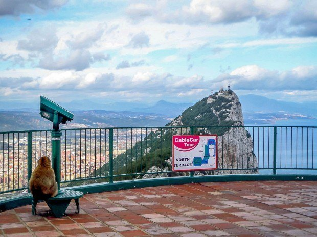 Summit of the Rock of Gibraltar with one of the Gibraltar monkeys enjoying the view.