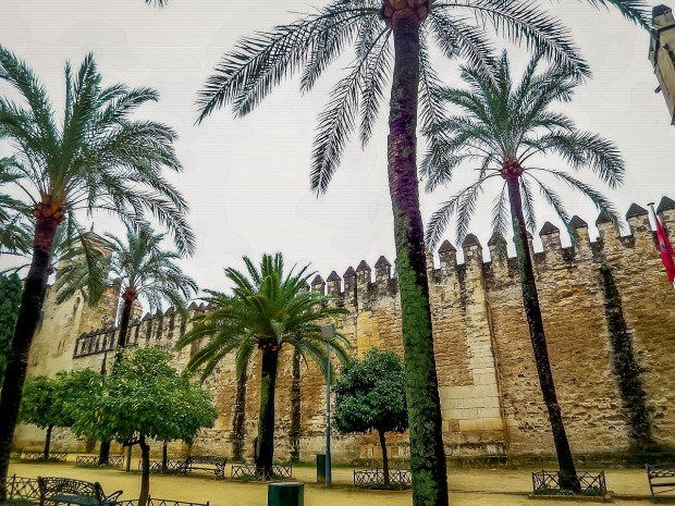 Palm trees in Cordoba, Spain.