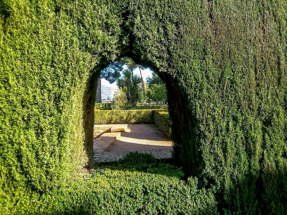View through a hedge into a courtyard