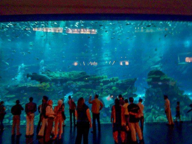 The aquarium at the Dubai Mall.