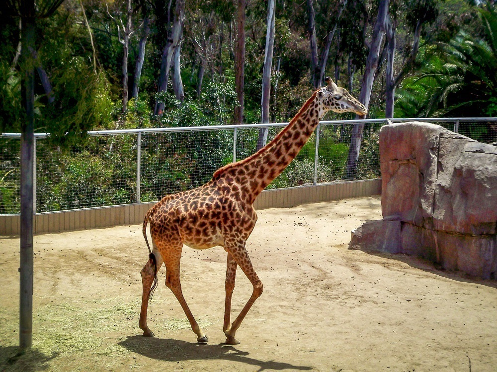 The San Diego zoo is one of the best things to do in San Diego California and one of the top San Diego attractions.