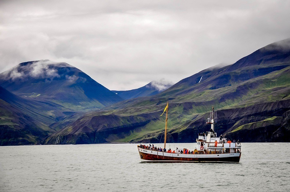 A boat whale watching in Husavik, Iceland