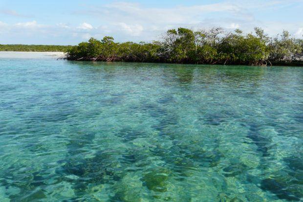 Bonefish lagoon glass bottom eco boat tour at Half Moon Cay Carnival Island.