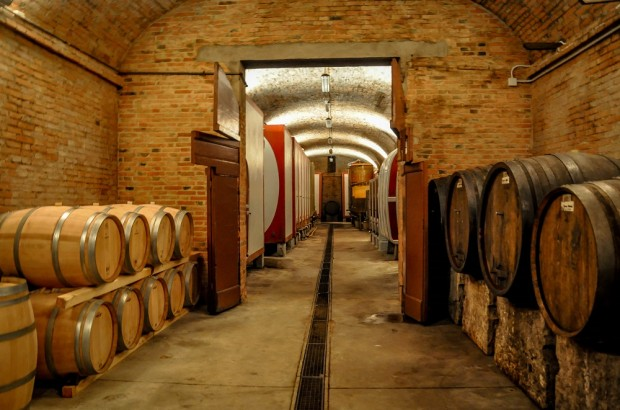 Wine cave at Fattoria Il Piano in San Gimignano during Cantine Aperte