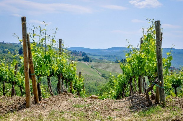 The vineyard and winery at Villa Caffagio in Tuscany during the Cantine Aperte wine festival in Italy. Villa Caffagio has an idyllic setting and spectacular wines, making it a highlight on the Cantine Aperte Toscana tour.