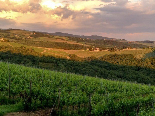 Tuscany vineyards at sunset during the wine festival of Cantine Aperte in Italy.