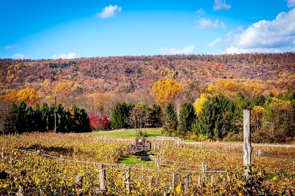 Visiting a vineyard is one of the best things to do in the Hershey area
