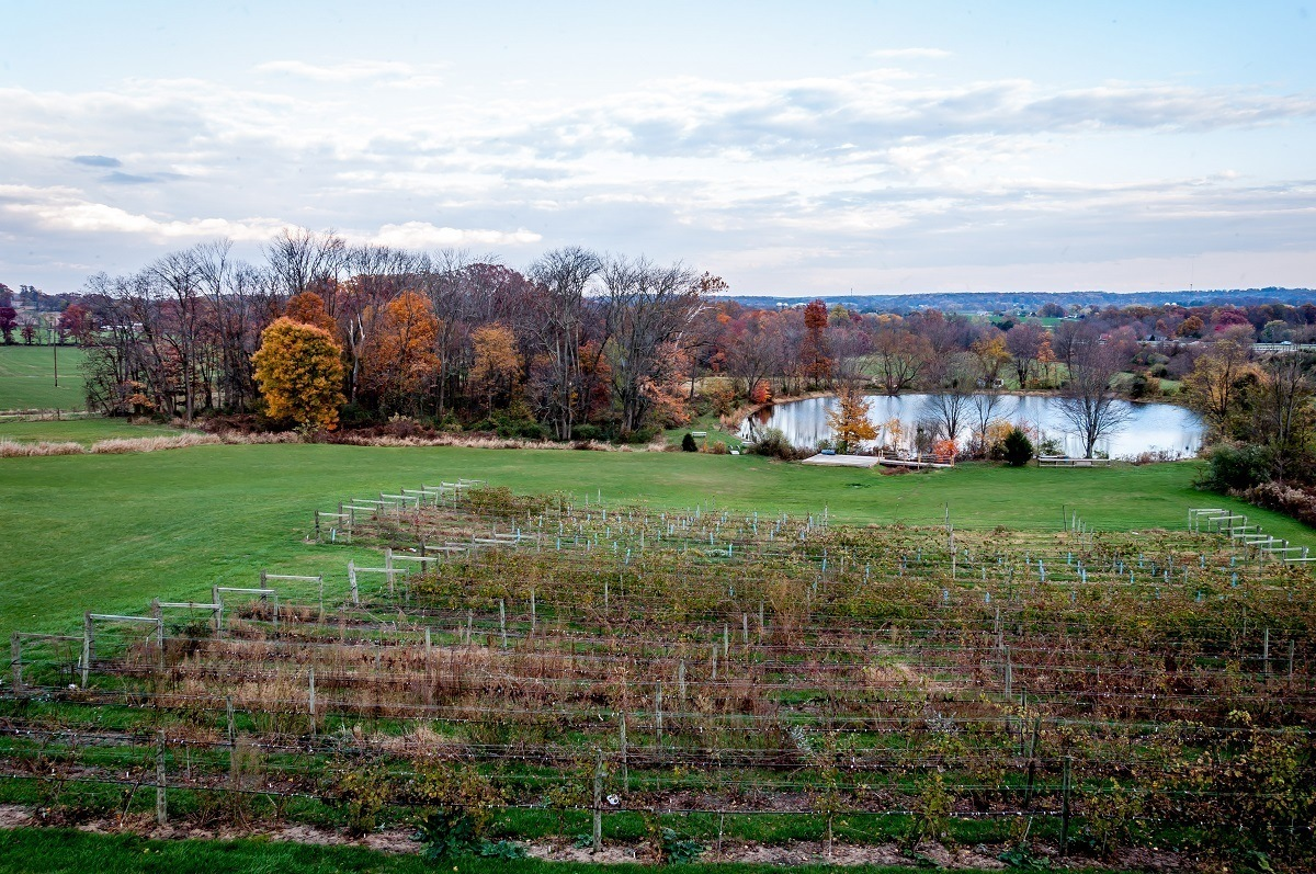 Grounds of the Vineyard at Hershey including rows of vines and pond
