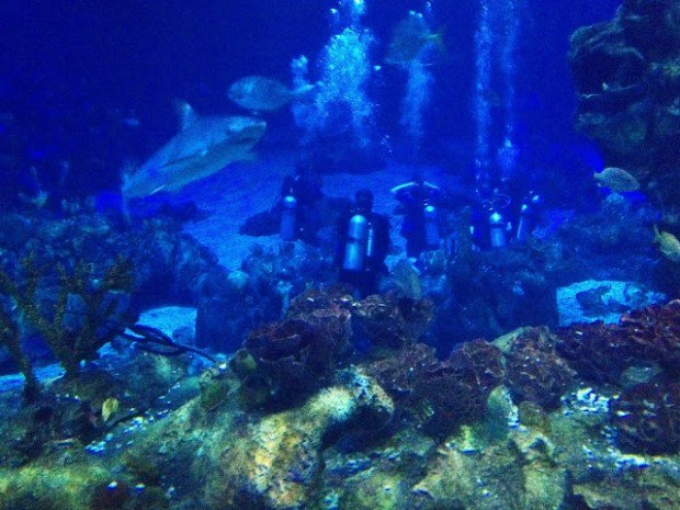 Scuba diving at Epcot is one of the best things to do in Orlando for adults