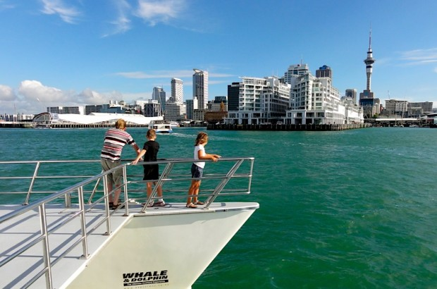 what-to-do-in-auckland-harbour