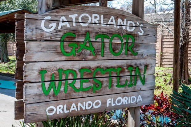 Gator wrestling at Gatorland in Orlando