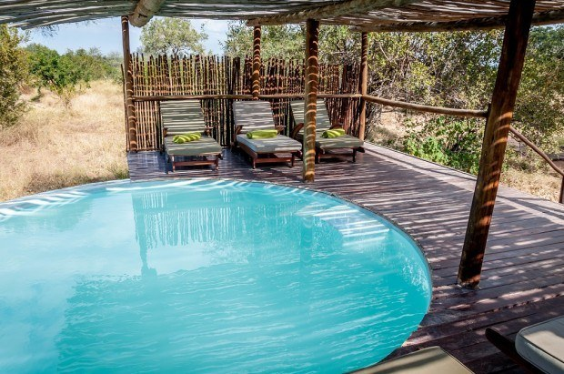 Elephants are known to drink from the pool at Africa on Foot