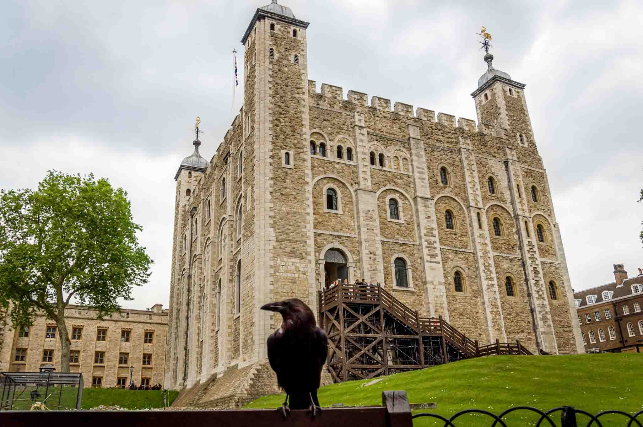 The Tower of London hosts a number of famous ravens.  Here, one poses for a picture in front of the Tower.  The Tower of London is the final stop on your Heathrow Layover.