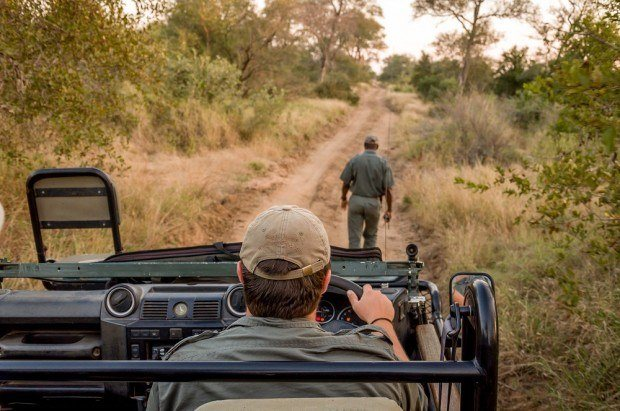 On your South Africa safari, you will have trackers and guides on your game drive to search for the animals.