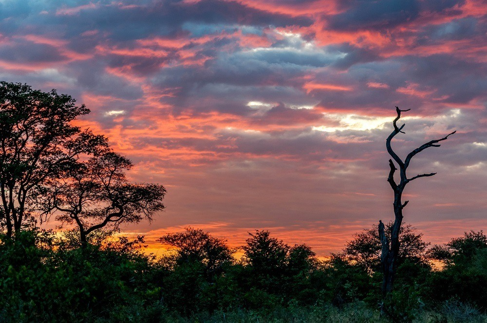 Pink, orange, and yellow sunset over the trees in Africa