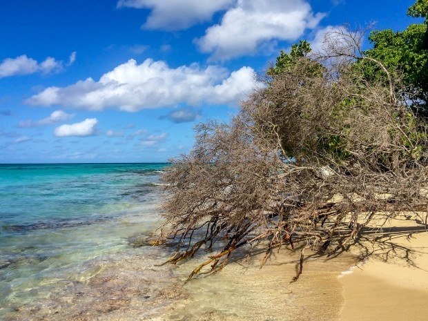 The shore of Buck Island Reef National Monument in St Croix, US Virgin Islands.