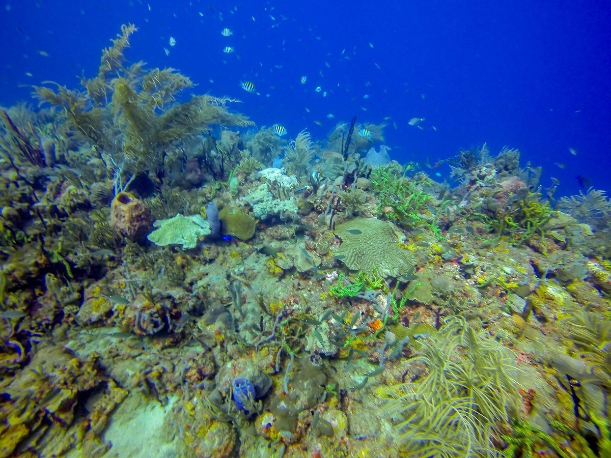 Scuba diving in Grenada's Molinere Bay.