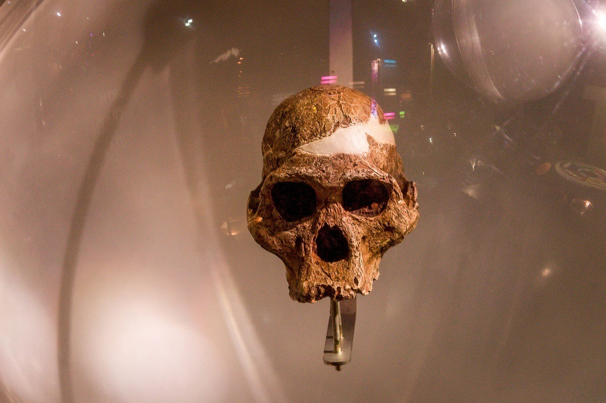 Skull at the Maropeng Visitors Center outside of Johannesburg, South Africa.