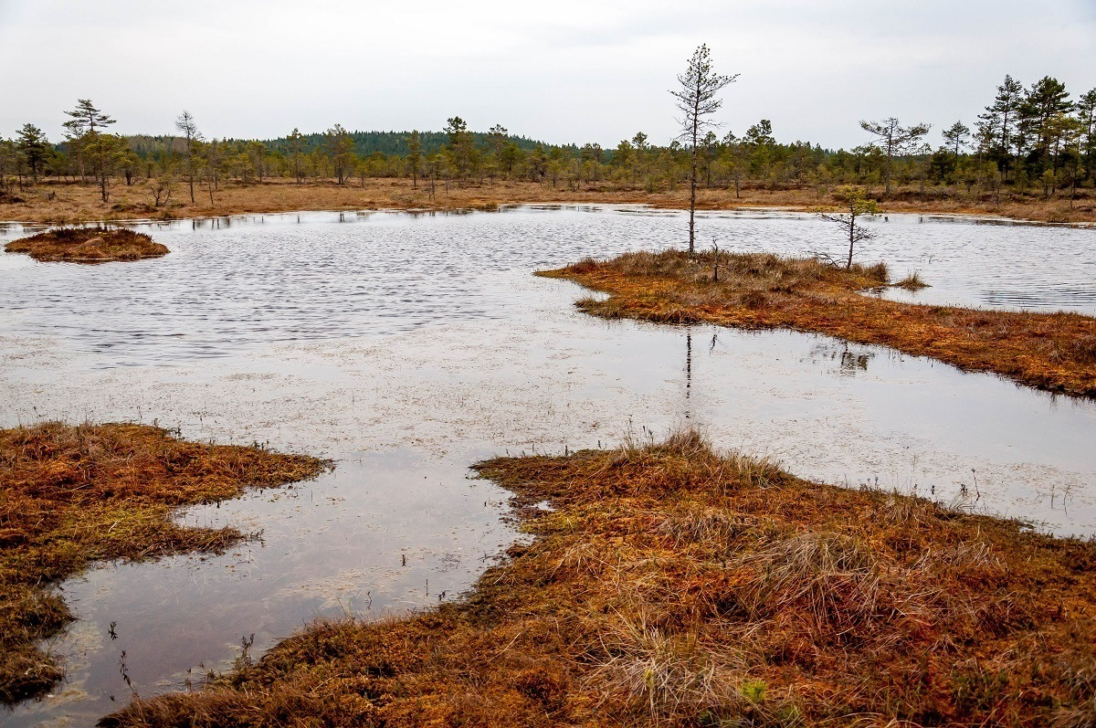 Reddish brown bog with water