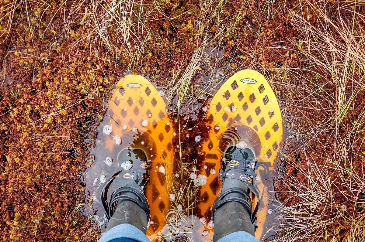 Yellow bog walking shoes sinking a bit in the bog in Estonia