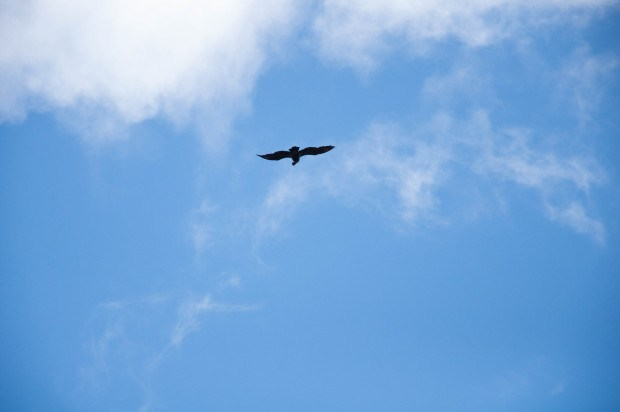 The black shadow of an Andean condor riding the thermals over our heads in the Avenue of the Volcanoes of Ecuador.