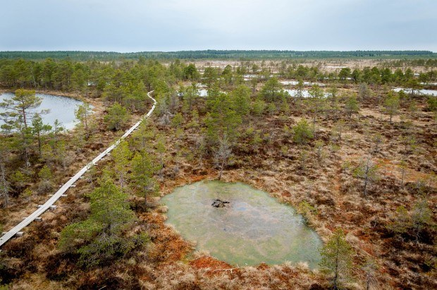Above one of the Estonian bogs
