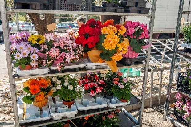 Flowers at the weekly market in Vaison la Romaine, one of the best markets in Provence