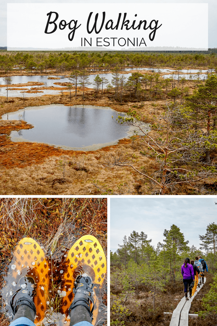 Bog walking outside Tallinn, Estonia