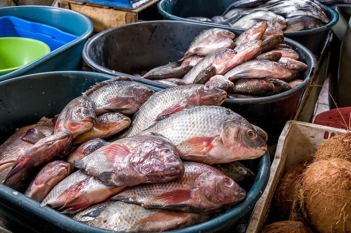 Fish in the Otavalo market.