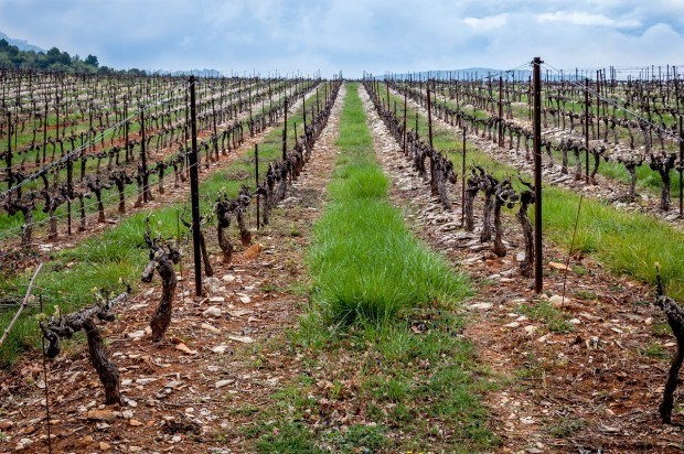 Vineyard on the Cotes du Rhone in France | Postcards from Provence