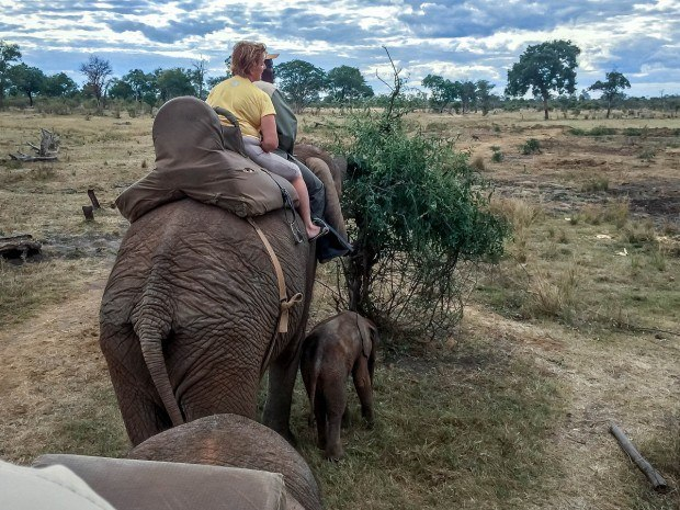 "Elephant rides may sound like fun, but it's important to consider how the animals are treated at all stages of ""training."" Long story short: elephants aren't meant to be ridden."