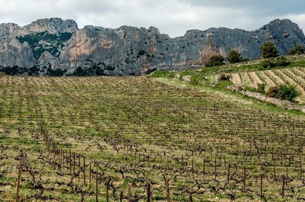 The vineyards of Domaine de Coyeux in the Cotes du Rhone region of France