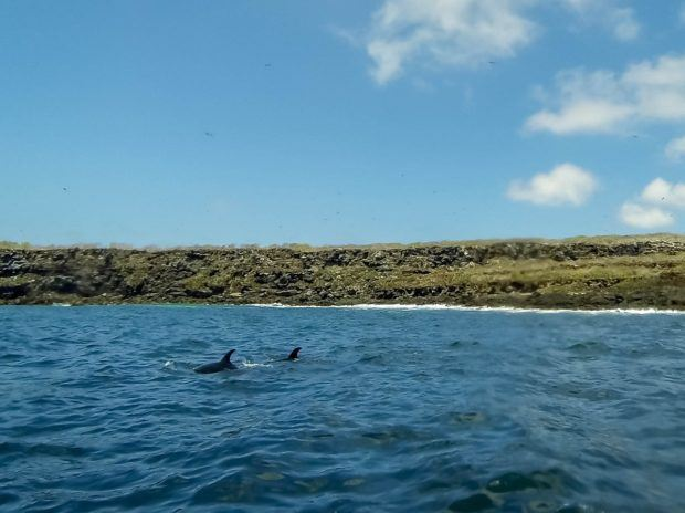 Favorite animals Galapagos Islands:  Bottlenose dolphins are favorites among visitors to Darwin's Islands.  We were able to swim with them in the waters off Genovesa Island.