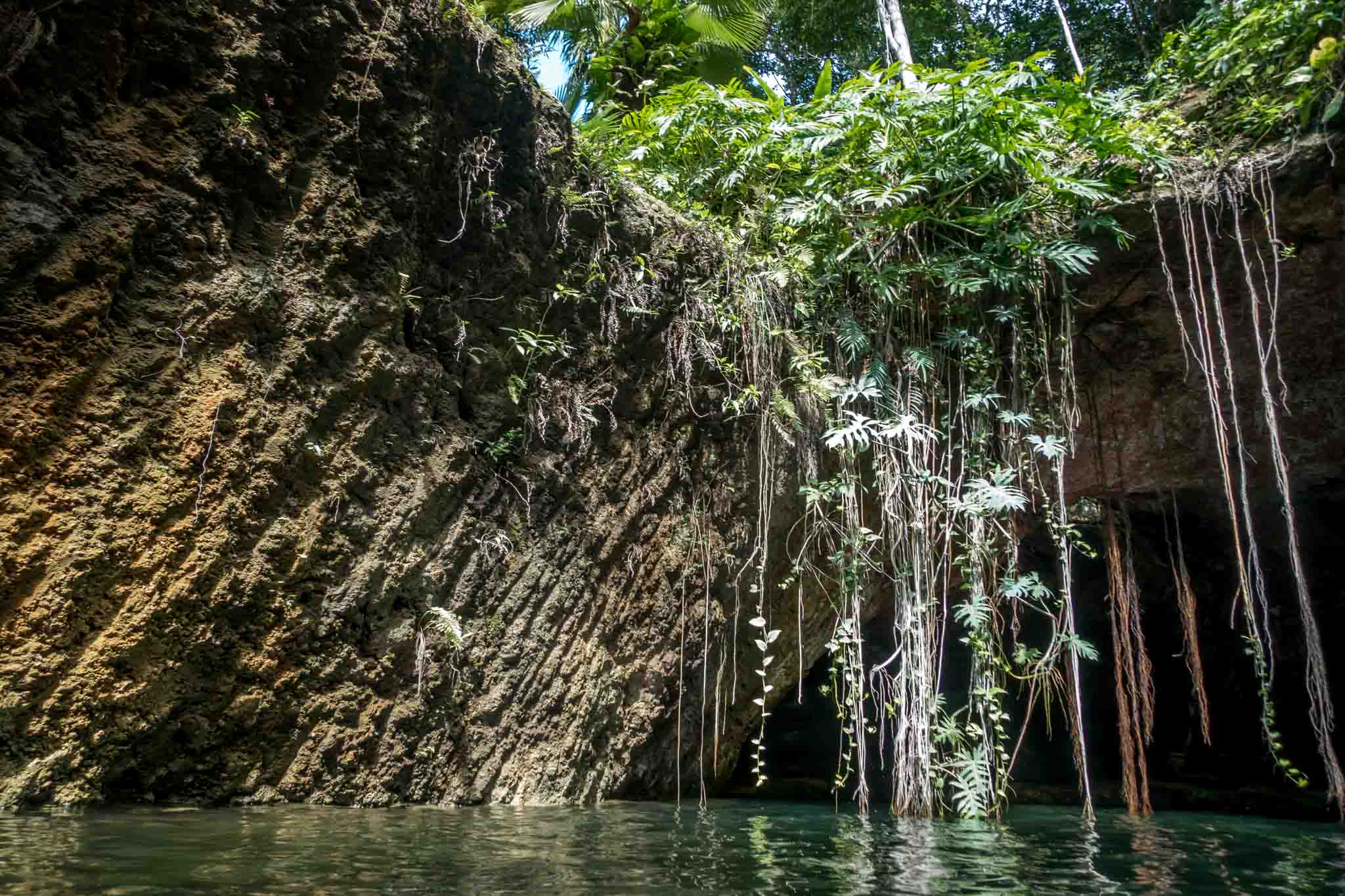 Plants and vines on the walls of a cenote