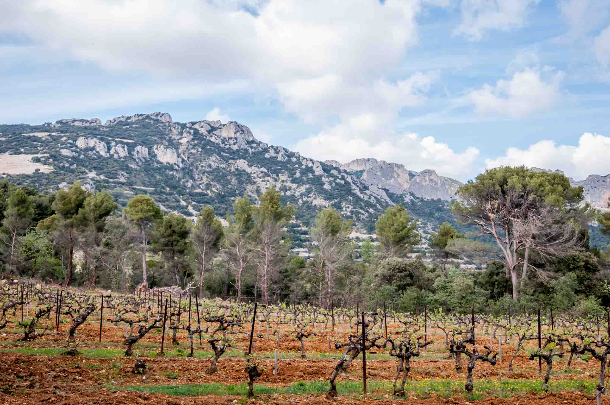 The vineyards and mountains of the Cotes du Rhone. Driving through this beautiful region - famous for its wine and views - is one of the best things to do in Provence.