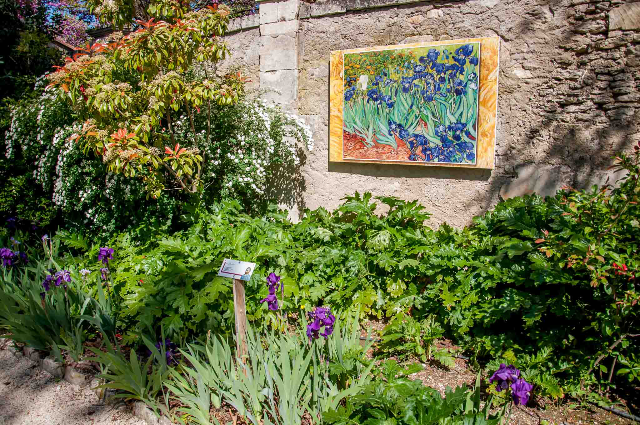 In Saint-Remy-de-Provence, France, many of Van Gogh's paintings are shown in situ -- visitors can see an image of the work in the exact setting where it was painted. This one is at Saint Paul's asylum where Van Gogh was a patient.