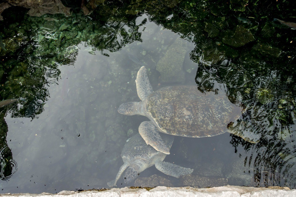 Xcaret park in Playa del Carmen, Mexico, focuses on turtle conservation