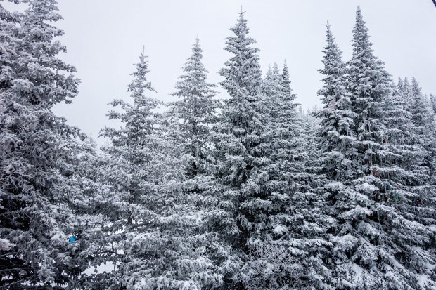 Fresh snow on the trees at Ski Santa Fe.