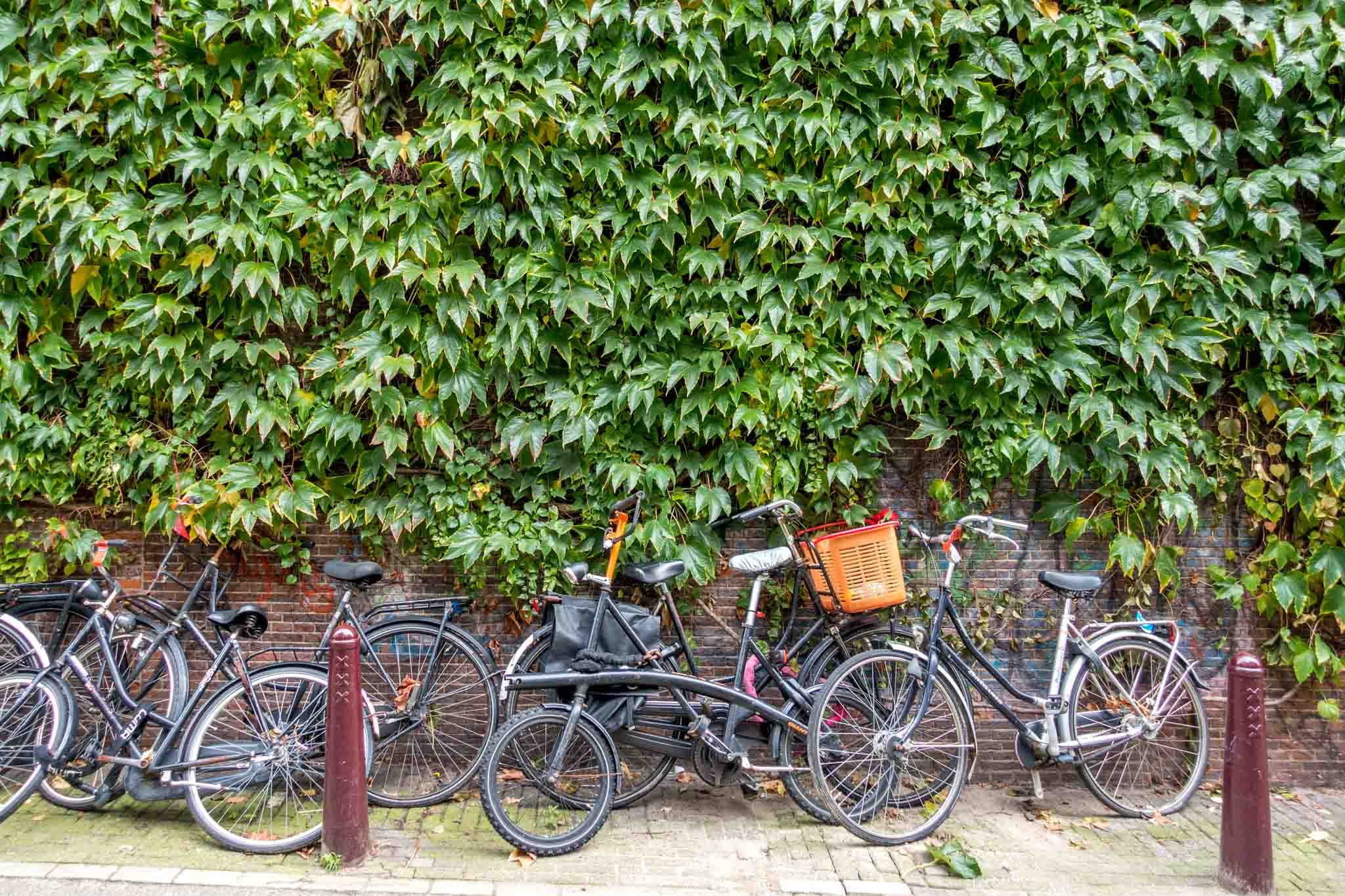 Bikes leaned up against the wall