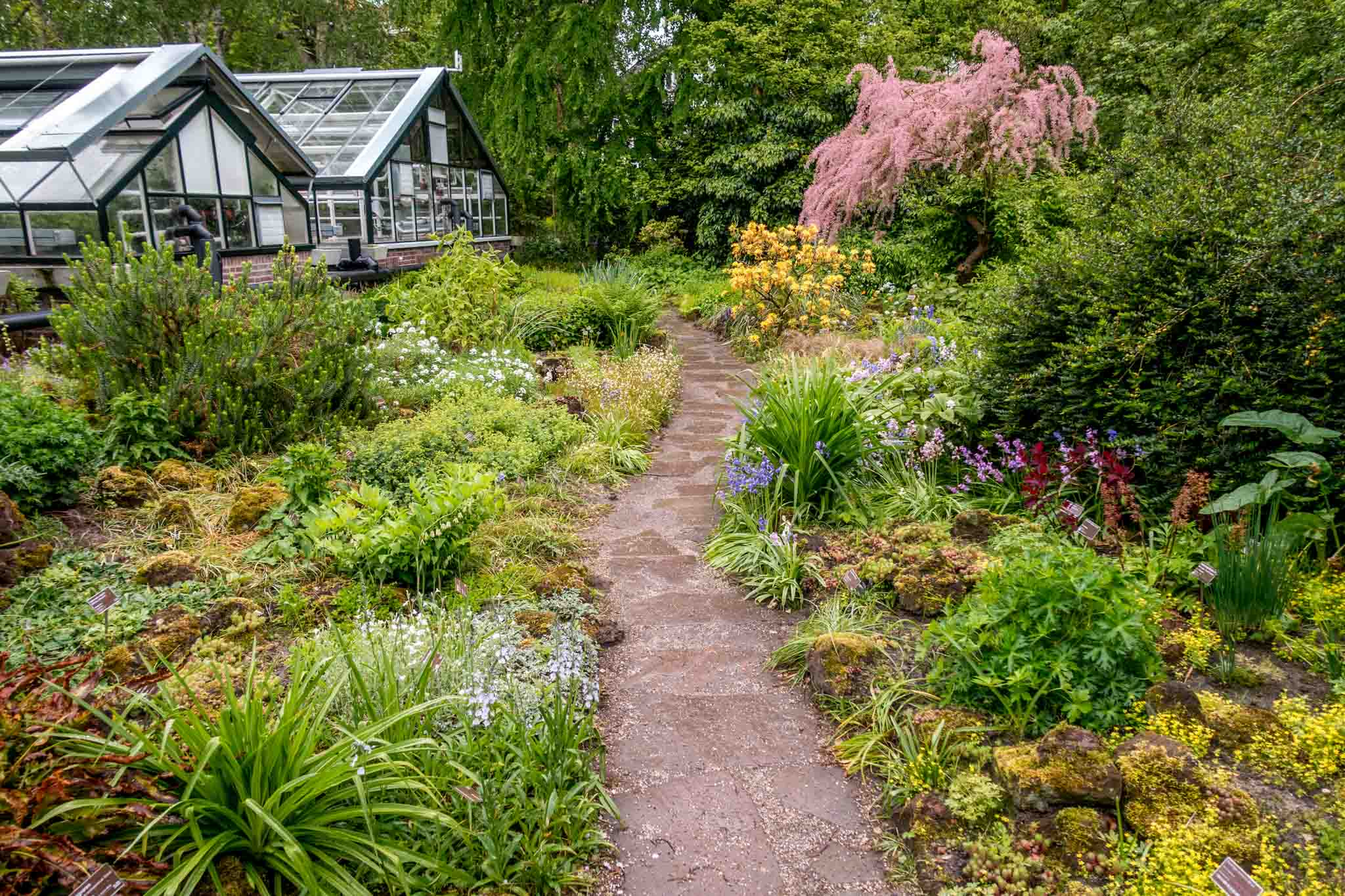 The Hortus Botanicus is filled with 6000 species of plants and trees and is where to visit in Amsterdam for lovers of the outdoors