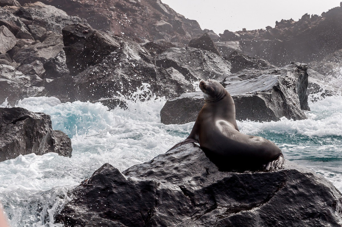 Seal at Punta Vicente Roca in the Galapagos Islands