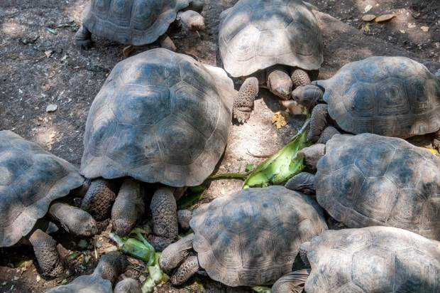 Tortoise breeding center in the Galapagos Islands