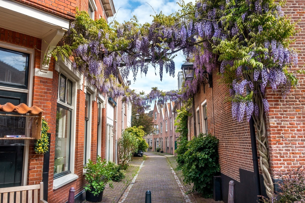 Wisteria covered street in Haarlem, an easy day trip from Amsterdam