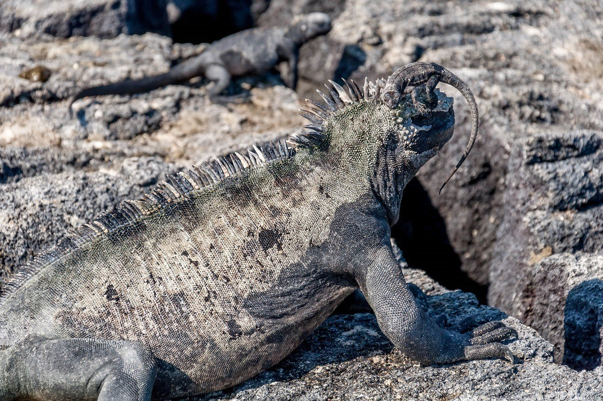 The curious animals of the Galapagos Islands in Ecuador - the first UNESCO World Heritage Site.