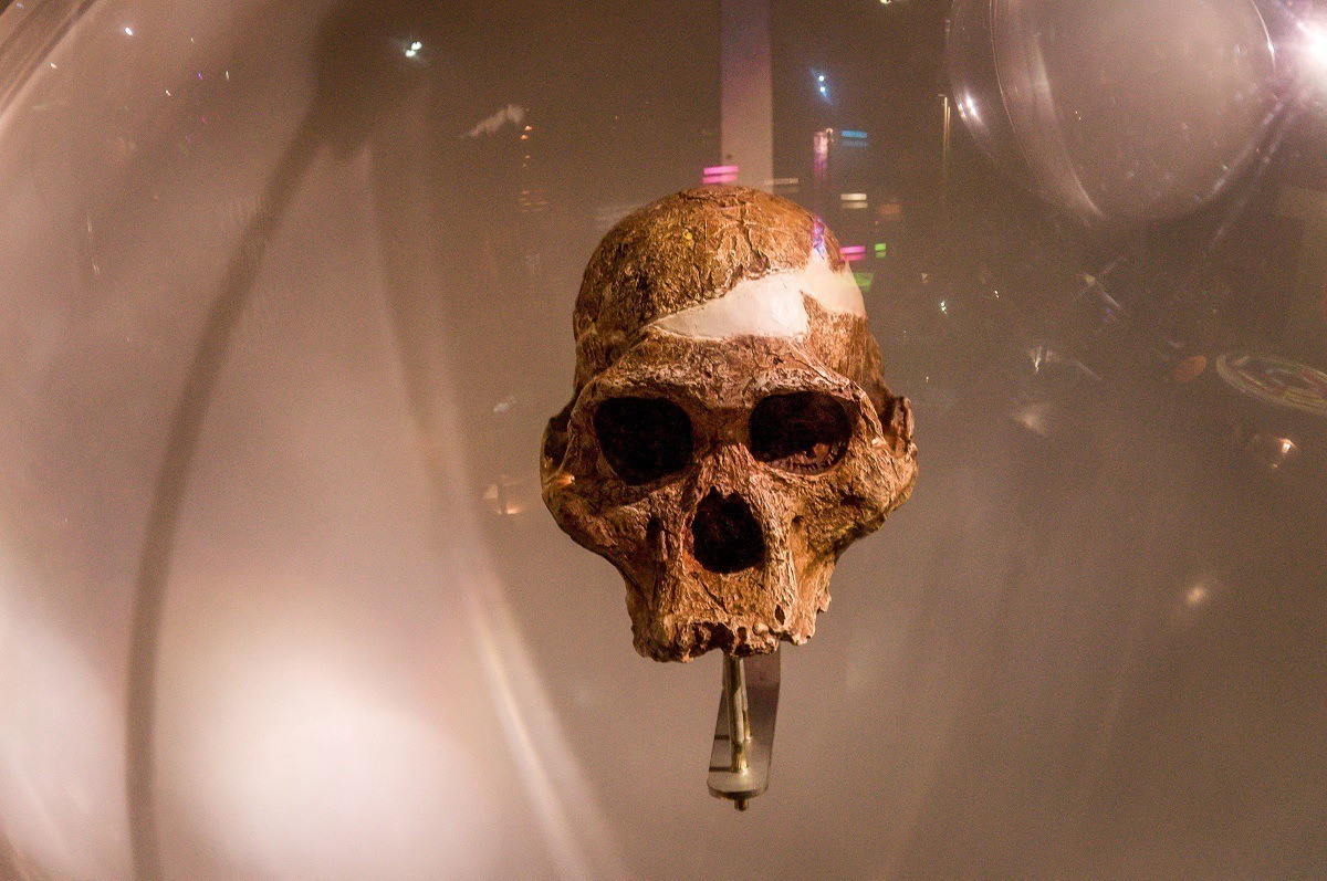 The hominid fossil sites of South Africa are known as the Cradle of Humankind.