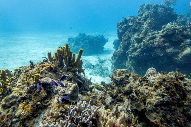 Playacar Reef in Cozumel.