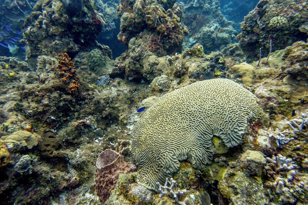 A brain coral formation in Cozumel.