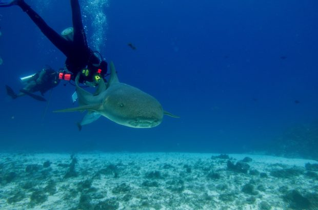 Getting up close with a nurse shark while scuba diving in Cozumel with Dive with Martin.