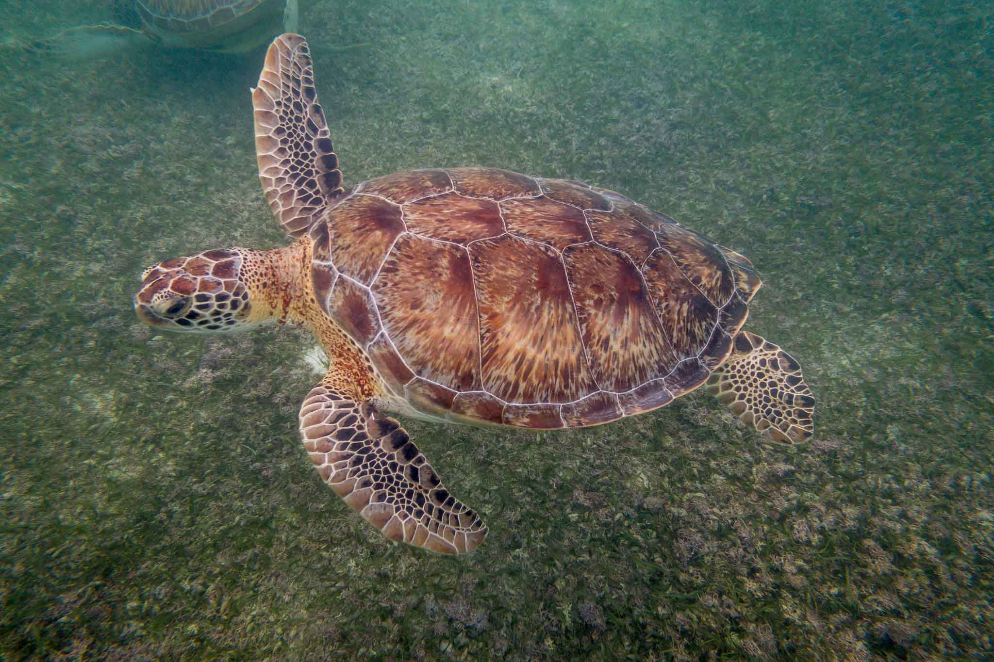 Akumal snorkeling is a great way to observe sea turtles