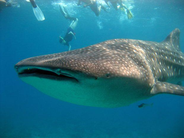 Not being able to snorkel with the whale sharks in Mexico is one of our top travel regrets.